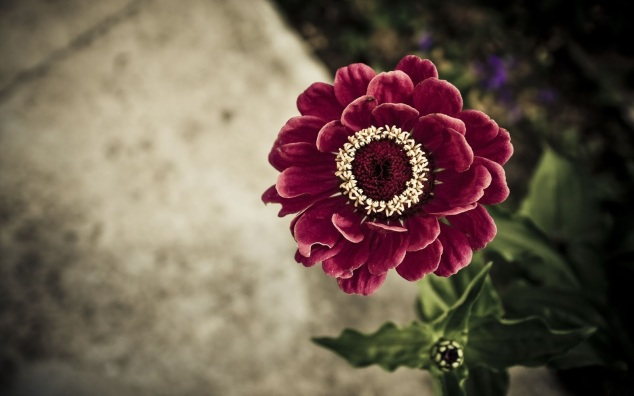 1255425248_1920x1200_red-flower-wallpaper-for-pc