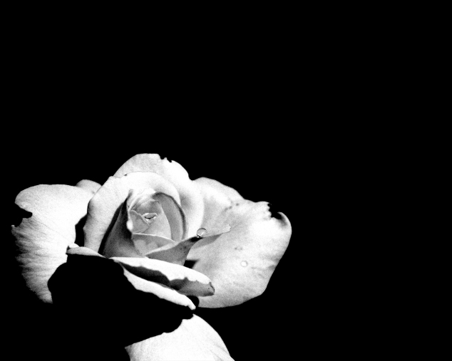 black_and_white_rose_1280x1024