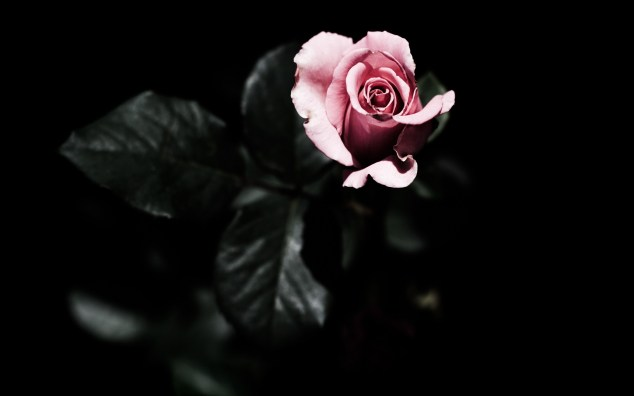 rose-pink-dark-2560x1600
