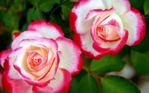 nice_flowers_2-wide